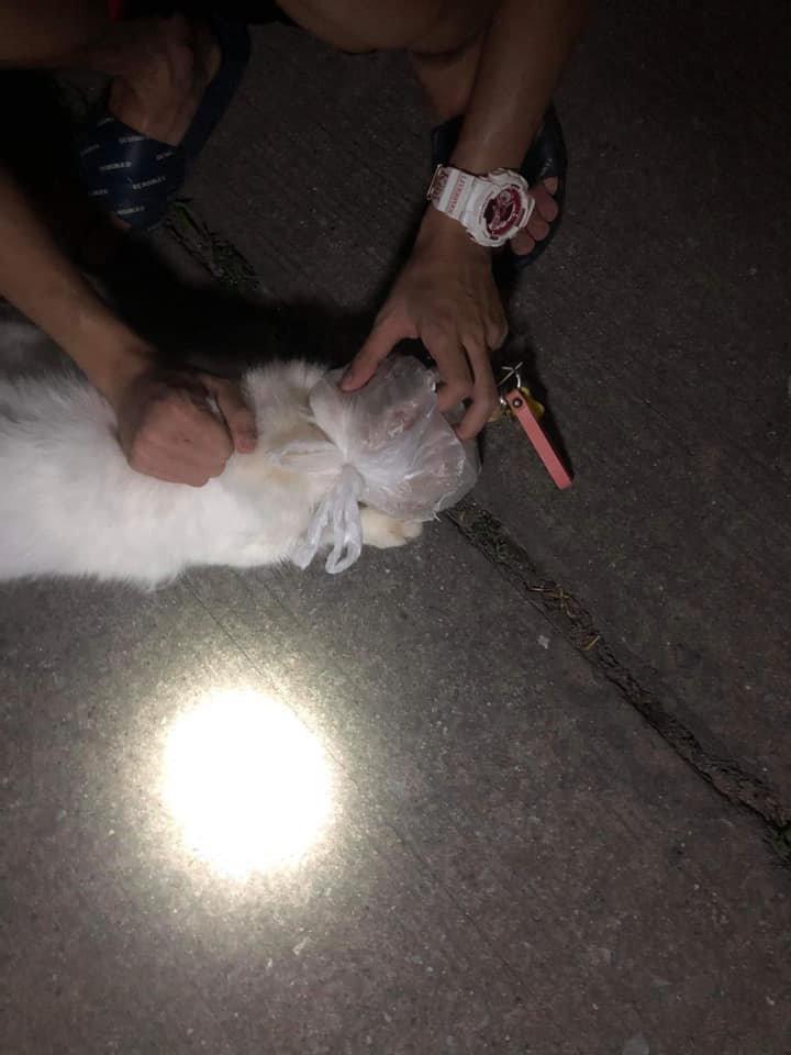 แมวถูกถุงพลาสติกครอบหัว